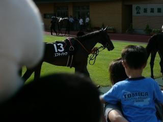 Niigata49