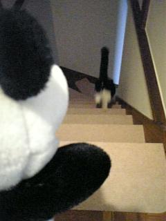 洋間から一階へ
