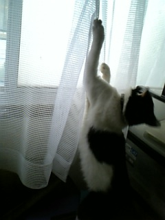 天様、網にかかる