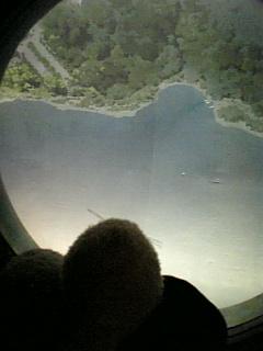 飛行機に乗った海豹