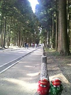 突貫杉並木