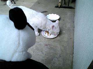 で、食うのか?