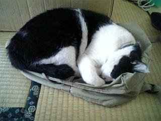 リュック猫