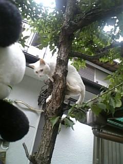 シロの木登り
