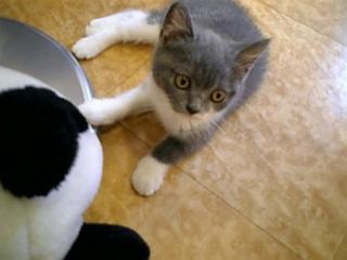 新猫モコちゃん