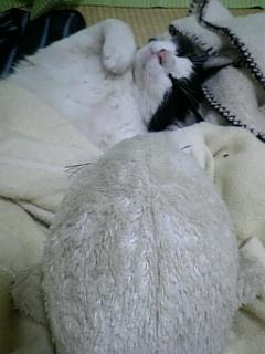 がんばる猫?