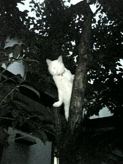 がんばる猫