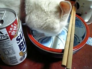 化け猫シロ