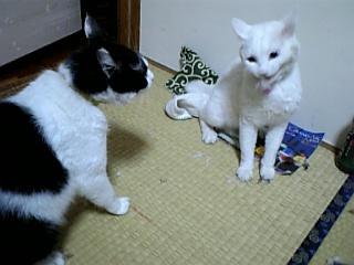猫バトルニュース3