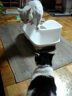 トイレを巡る攻防2