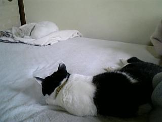 休日の猫たち