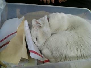 箱入り眠り猫