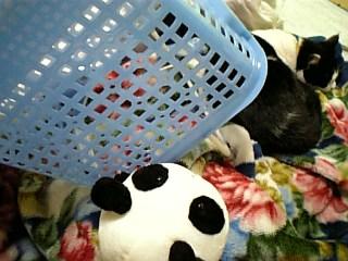 シナモンさん、猫捕獲