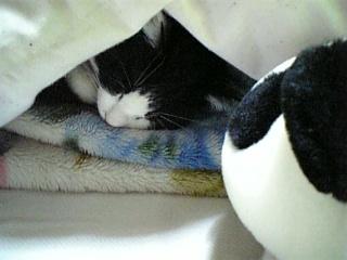 シロクローニャン、ヨガの眠り