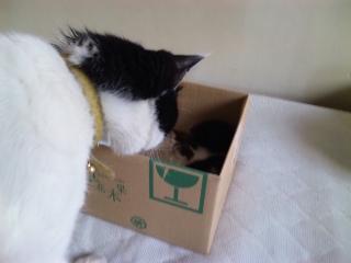 テンさまの気になる箱