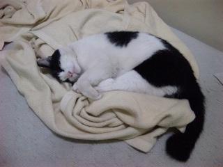 猫はよく寝る