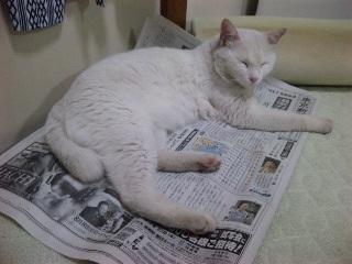 なぜ猫は新聞でねるのか#