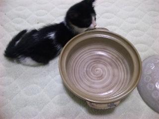 猫鍋への道2