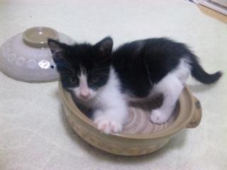 猫鍋への道3