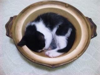 猫鍋完成!