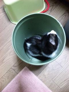 捨て猫タッタ