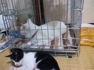 捕われの猫