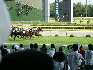 Niigata410