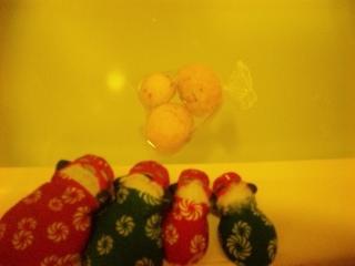 伏見稲荷の柚子湯