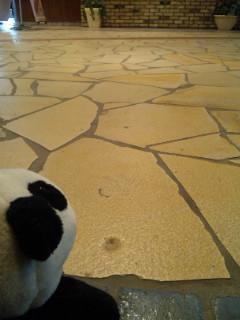 コタの気になる床の化石