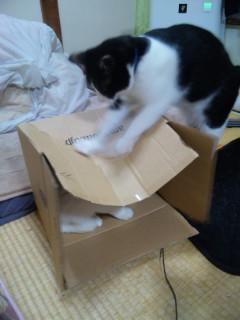 篭る猫.vs.<br />  壊す猫