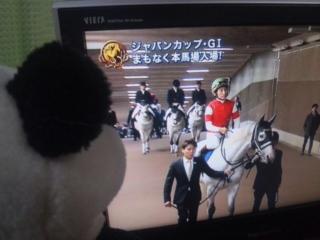 誘導馬の誘導?