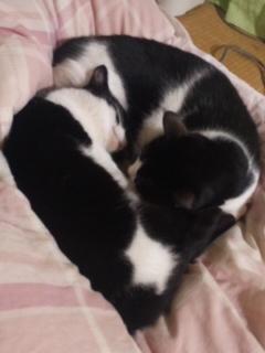 有馬記念の間、この二猫は