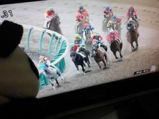 中山4レース