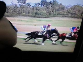 新潟9レース、直線で沈み最下位