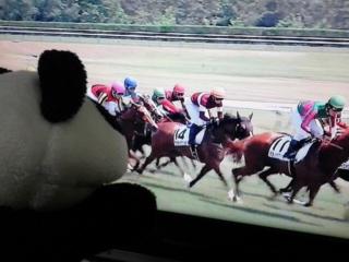 新潟5レース、タカラピクシイちゃん7<br />  着