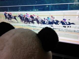 新潟1レース