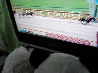 東京5レース