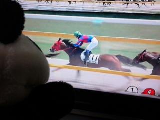 新潟6レース