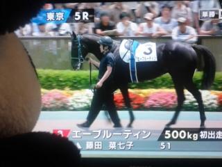 東京5レース、二度目の新馬戦