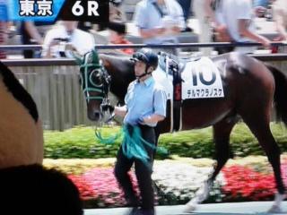 東京6レース、初芝デルマクラノスケくん