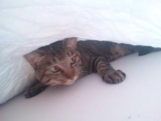 猫カルタ・ふ