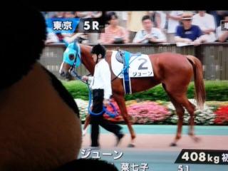 5レースは新馬戦