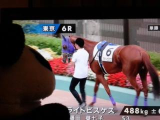 東京6レース、今日期待のブライトピスケスくん