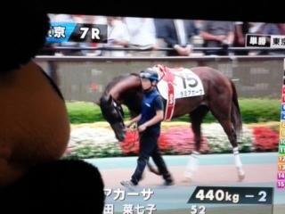 東京7レース、入れ込んでる?