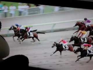 福島8レース、ホホエムオンナちゃん12<br />  着