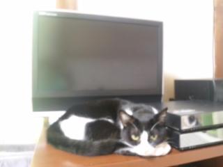 テレビがつけられない