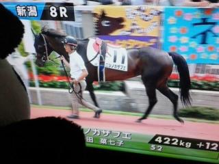 8レース、ニシノカザブエちゃん