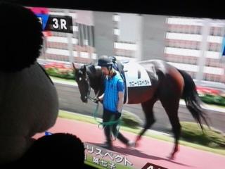 ぜ〜は〜3レース