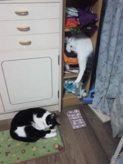 猫アパート大繁盛