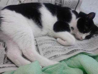 新聞読むと